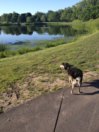 Life lessons from a dog- walks