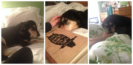 Life Lessons from a dog- sleeping